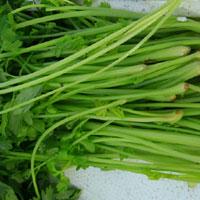 芹菜的功效 多吃芹菜能防癌还能治疗黄疸