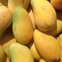 吃芒果的好处 吃芒果能止咳化痰还能防癌