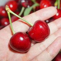 樱桃的功效 多吃樱桃能美容安眠还能减肥