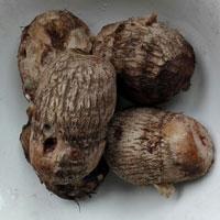 芋头的功效与作用 多吃芋头能减肥抗癌