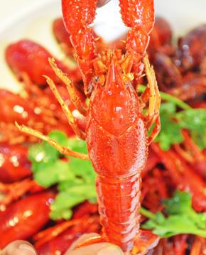 关注小龙虾致癌事件 如何挑选健康的小龙虾