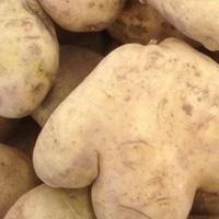 吃马铃薯的好处 常吃马铃薯能养胃健脾