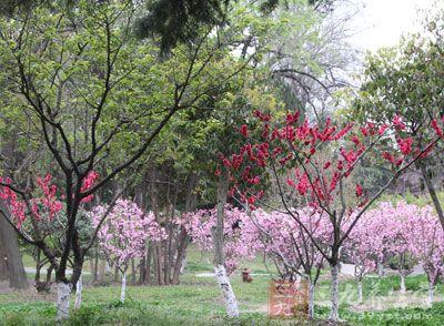 清明:每年4月5日(或4日),气温回升,天气逐渐转暖,草木繁茂