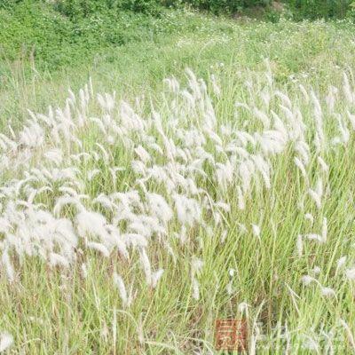 狗尾巴草生于荒野、道旁、田间,又称为狗尾草