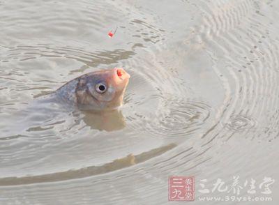 钓鲤鱼技巧 野钓鲤鱼的4个实用技巧
