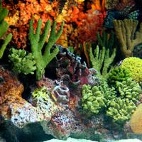 珊瑚的炮制方法