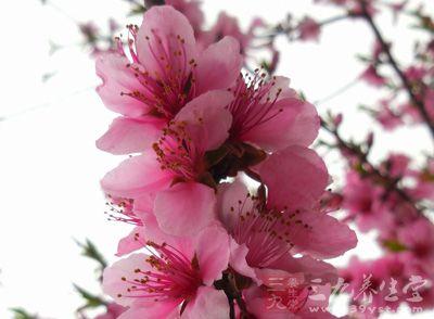 芒种节气 芒种送花神表示感激