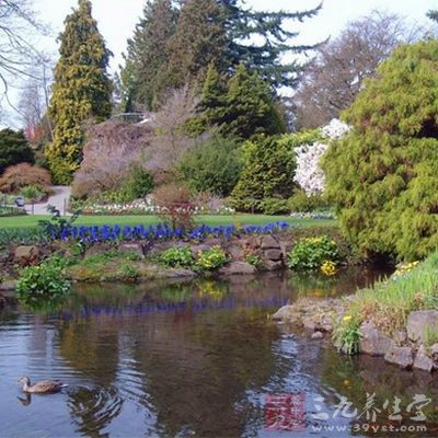 玫瑰花园于1961年市庆七十五周年时完工