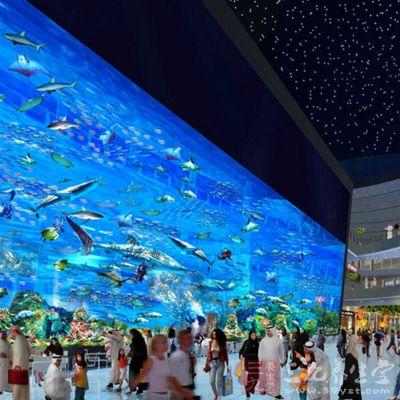 迪拜的水族馆却是世界大室内水族馆