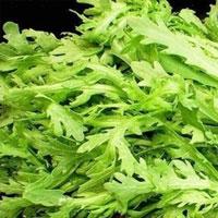 菊花菜的功效与作用 吃菊花菜能预防癞皮病