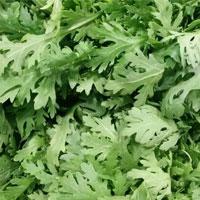 茼蒿的营养价值 茼蒿里含有多种氨基酸