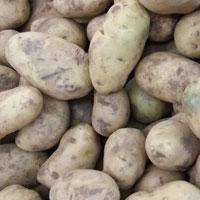 土豆的功效与作用 吃土豆有降糖降脂的功效
