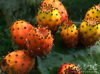 仙人掌果富含的蛋白质具有维持钾钠平衡