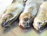 这种鱼竟有益肠癌患者