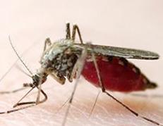 夏季被蚊子咬到易惹上这些疾病