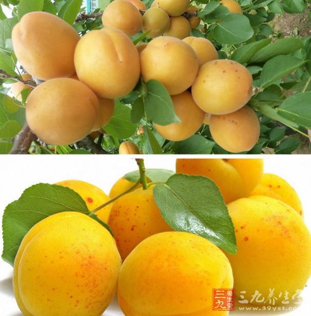 杏含有适量的维生素C及丰富的维生素A原,还含糖、蛋白质、脂肪、无机盐、维生素B1维生素B2等,是一种营养价值较高的水果