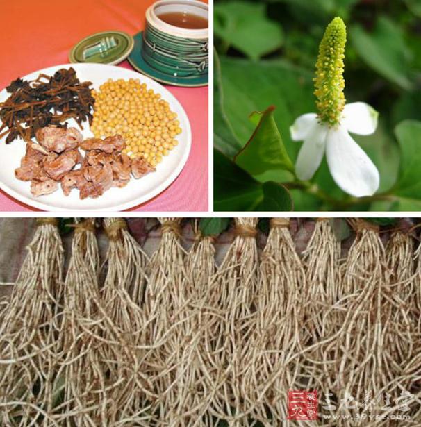 鱼腥草的功效 鱼腥草能够提高机体免疫力