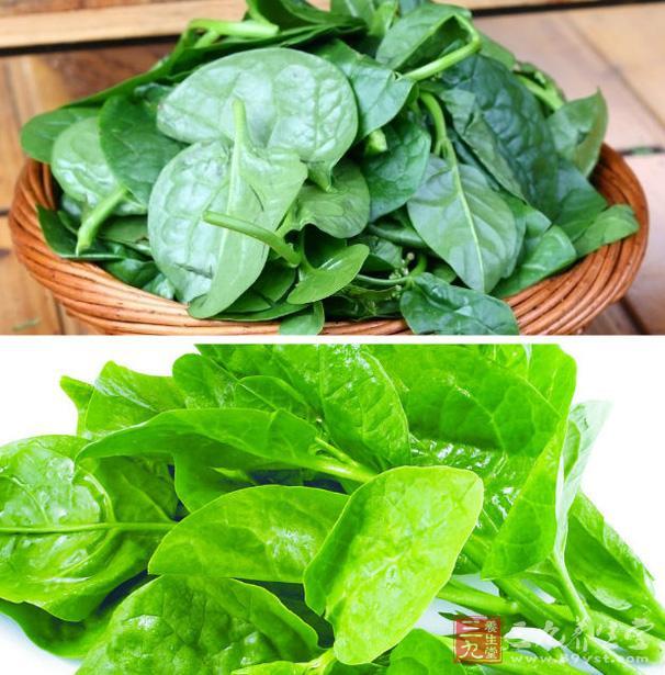 木耳菜是什么 木耳菜的营养价值有哪些