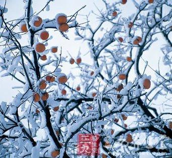 二十四节气养生之冬至养生
