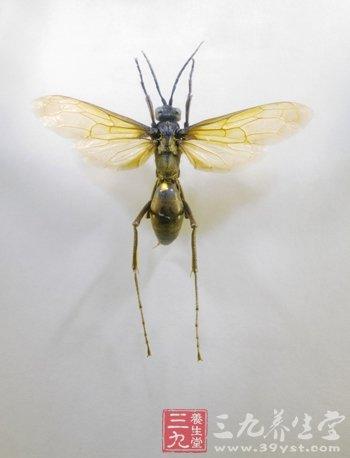 牛皮癣患者要避免蚊虫叮咬