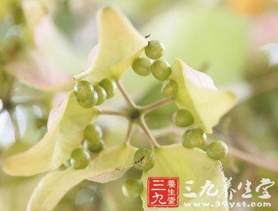 花丝愈合成一圆柱体,约与萼片等长;雌花常有退化雄蕊围生子房基部