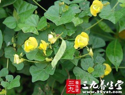 山扁豆 - 三九养生堂