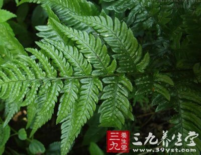 拉丁植物动物矿物名:dryopteris varia(l.)o.