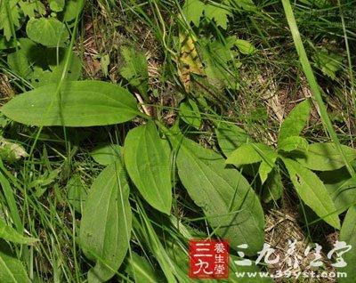 背景 壁纸 绿色 绿叶 树叶 植物 桌面 400_318
