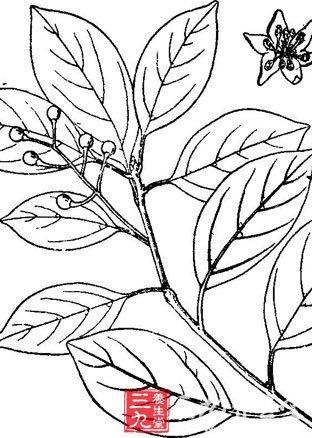 简笔画 设计 矢量 矢量图 手绘 素材 线稿 312_438 竖版 竖屏