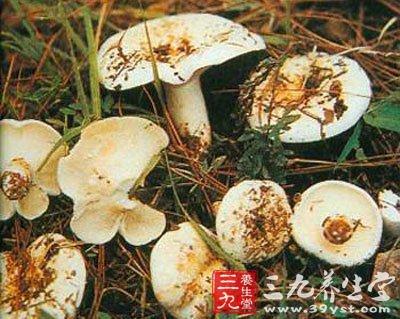蘑菇蛋壳粘贴画