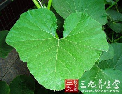 野生红木树叶子图片