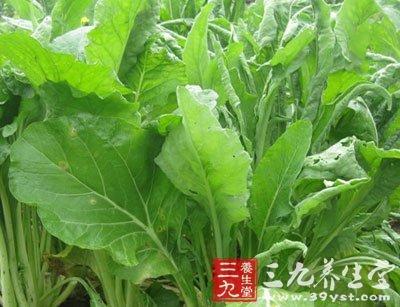 柳叶菜花图片