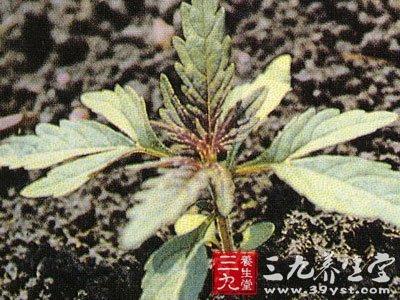 背景 壁纸 绿色 绿叶 树叶 植物 桌面 400_300