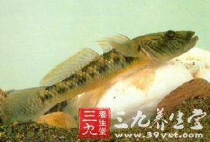 沙虎鱼_沙鰛,呵浪鱼,沙竹,光鱼,油光鱼      【来源】     药材基源:为鰕虎鱼