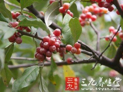 隐头花序,花序托(榕果)成对着生于叶腋或簇生于树干上和无叶的枝上,倒