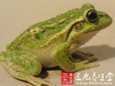 绿青蛙qq头像