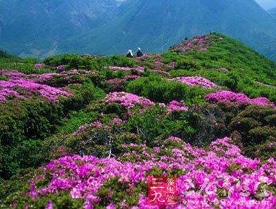 花期:3月      武汉东西湖新沟,荷包湖,走马岭农场的万树桃花
