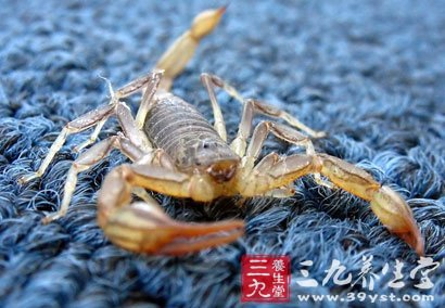 蝎子的动物名片