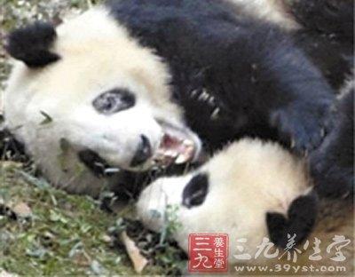 """最近不少去过动物园的杭州市民发现其中一只熊猫的标志性""""黑眼圈"""""""