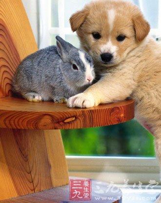 熊猫现身成都 家中饲养宠物要注意哪些事项