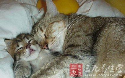 各种动物的睡觉方式