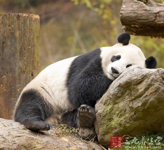 7、你有没有自己想过做生日蛋糕?   从没想过-8   想过,也做过-9   只是想过-10   8、去动物园,你最想去看下面哪种动物?   海豚-9   猴子-10   大熊猫-11   9、晚上睡觉前你会喝一杯水吗?   不会-10   不确定-11   会-12   10、要买一个礼物给爸爸,你会买下面哪一样?