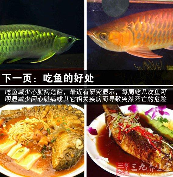 天价金龙鱼 细说常吃鱼13个好处