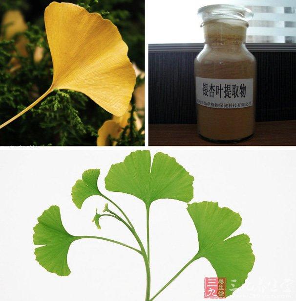 银杏叶的功效与作用-银杏叶提取物