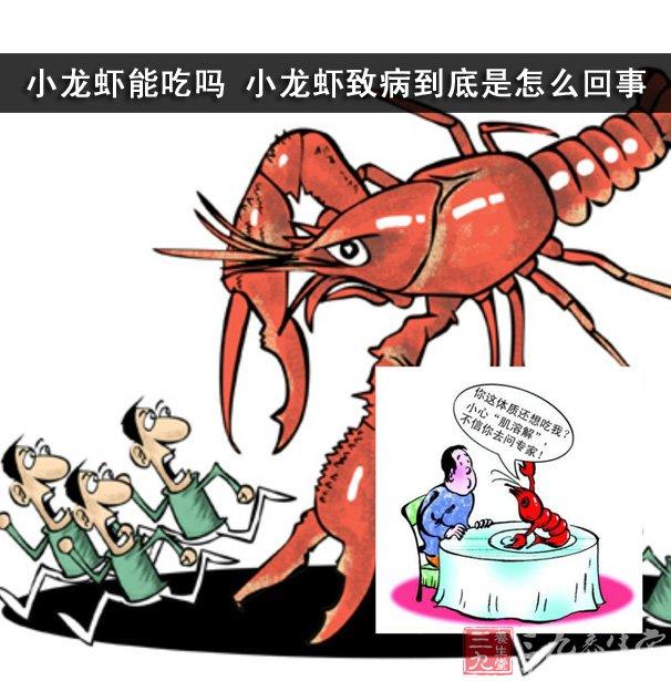 小龙虾能吃吗 小龙虾致病到底是怎么回事 - 三