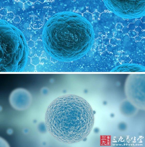 据物理学家组织网近日报道,我们的血液是由骨髓里的造血干细胞不断补充的,这些造血干细胞分化生成各种血细胞,包括白血细胞。   但细胞分化也容易出错,包括血细胞在内的各种细胞分化频率越高,就可能积累越多的基因突变。   比如,人们在急性骨髓性白血病(AML)患者的细胞中也发现数百个突变,但还不清楚健康的白血细胞是否也能容纳突变。   在新研究中,科学家对这位超百岁老年妇女的白血细胞进行了全基因组测序,以确定在其一生中,健康白血细胞中发生的基因突变是否积累下来。结果她白血细胞的基因突变超过了400个,而在她