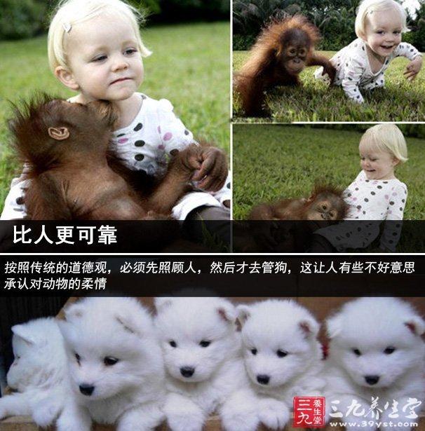 """比人更可靠? 按照传统的道德观,必须先照顾人,然后才去管狗,这让人有些不好意思承认对动物的柔情。根据一项新近的研究表明,与动物的交流其实可以发展我们对别人的关注。 但是也有不少人显现出对动物极度的关爱,而对周围的人情感淡漠。为此,精神分析专家吉拉尔·莫莱尔(Gérard Morel)解释:""""有时候,对动物泛滥的同情心是我们对与人无法倾心相对的遗憾的补偿。""""这种极端的爱也有一定的道理,因为在动物的陪伴下,我们会产生催产素和依恋激素,这些幸福因子通常只有在被"""