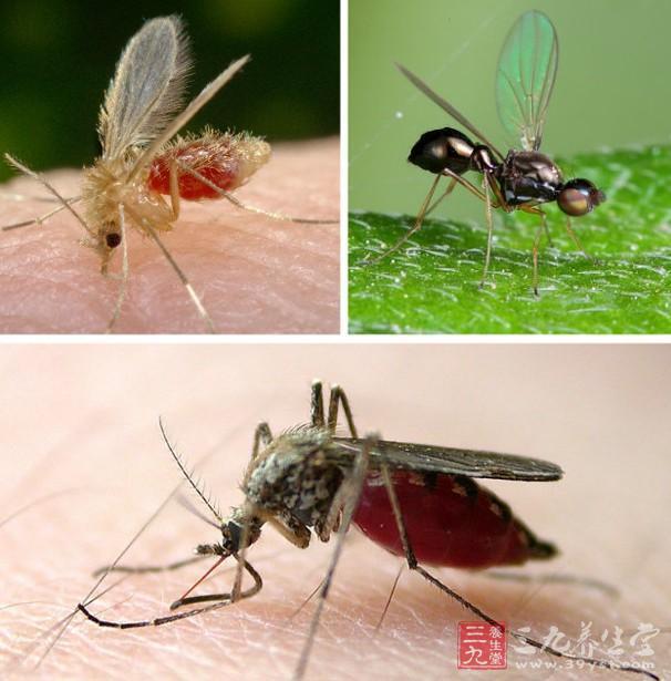 按蚊种类检索表的编制