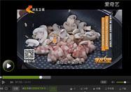 20160930家政女皇节目:夏天讲口菇炒肉的做法