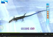 20160409生活帮:遭遇蜥蜴危险吗